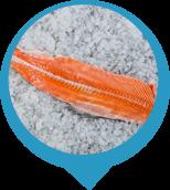 Fish backbones